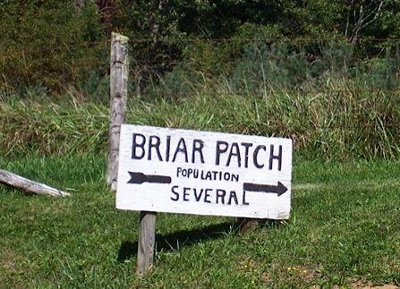 Briar Patch2